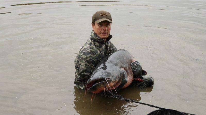 big catfish