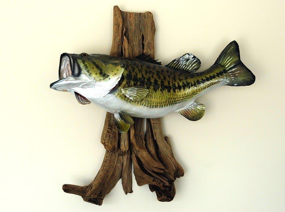 Catching Largemouth Bass