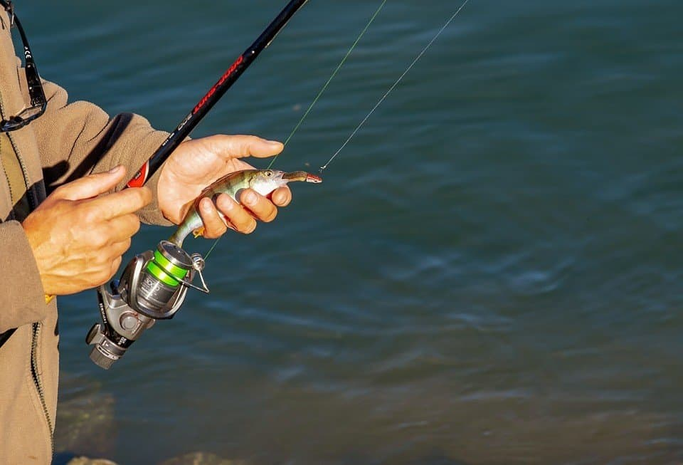 Rod, Fishing Line, and Lure