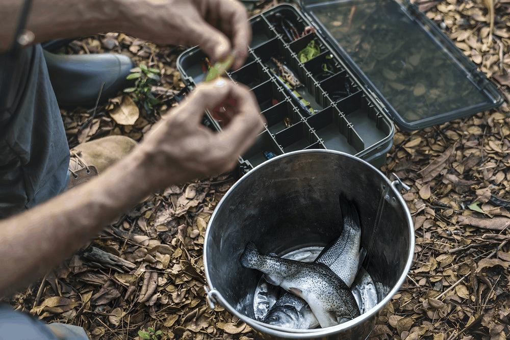 Fish in Bucket