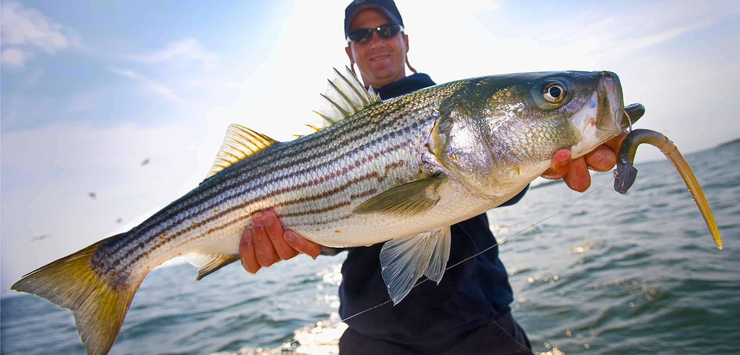 Man Holding Bass Fish