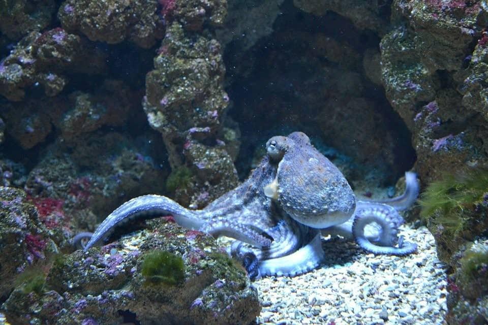 Octopus on the seafloor