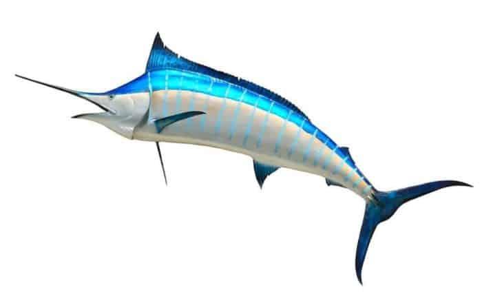 Sailfish vs Marlin